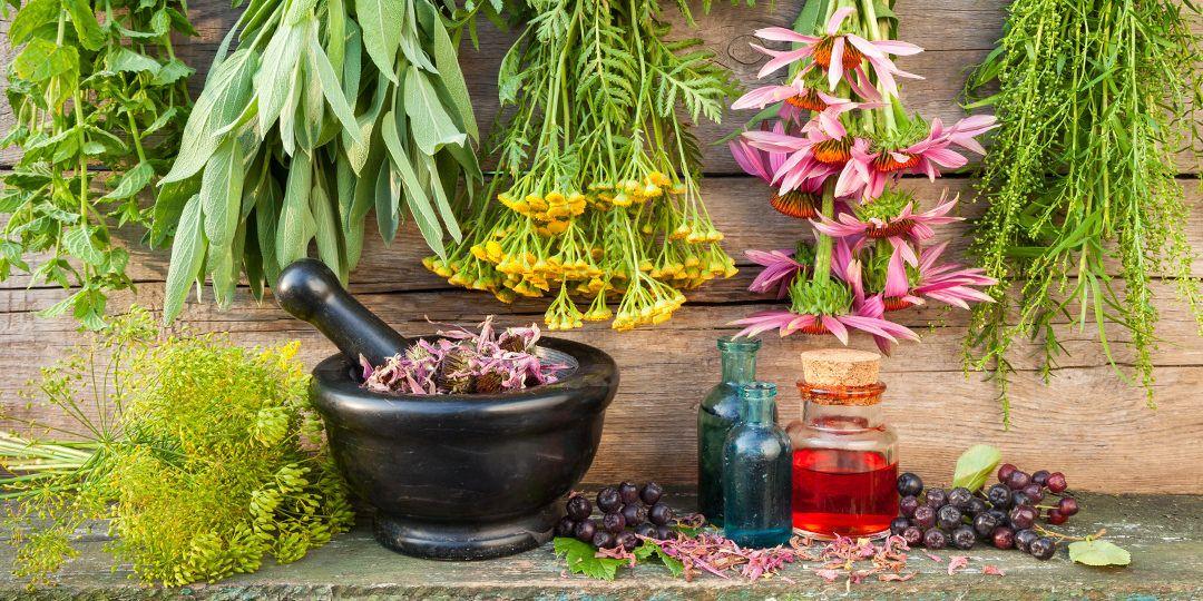 Växtbaserade läkemedel – här är hela listan